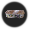sandwich_thonmousse